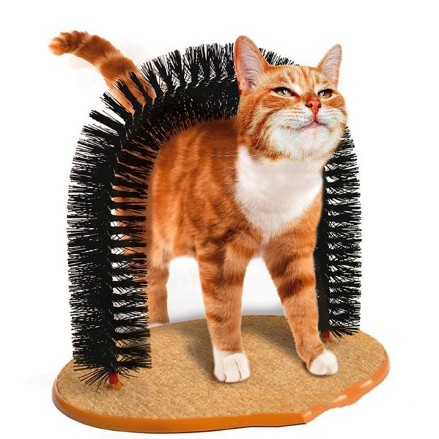 Cat's Scratching Arch